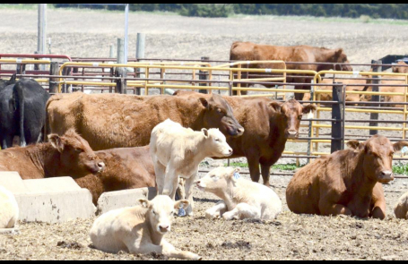 Outlook for beef prices less than ideal amid pandemic