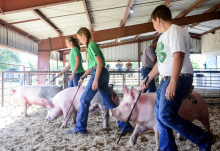 4-H'ers shine at revised county fair